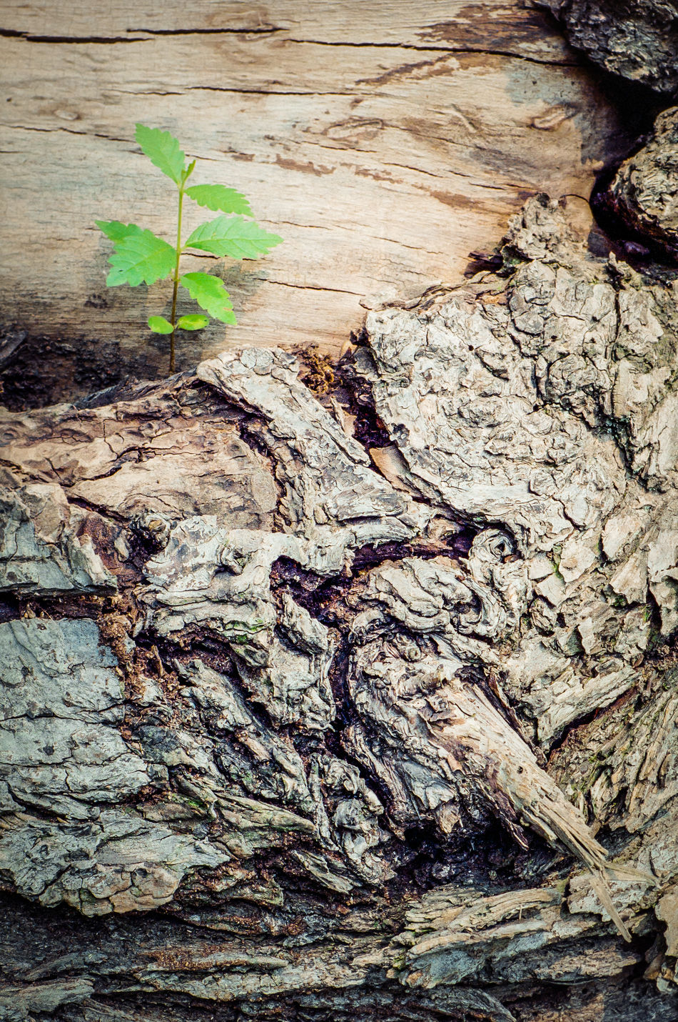 In the forest Backgrounds Close-up Day Leaf Nature No People Outdoors Pattern Rebirth Textured  Tree Trunk Nikonphotography