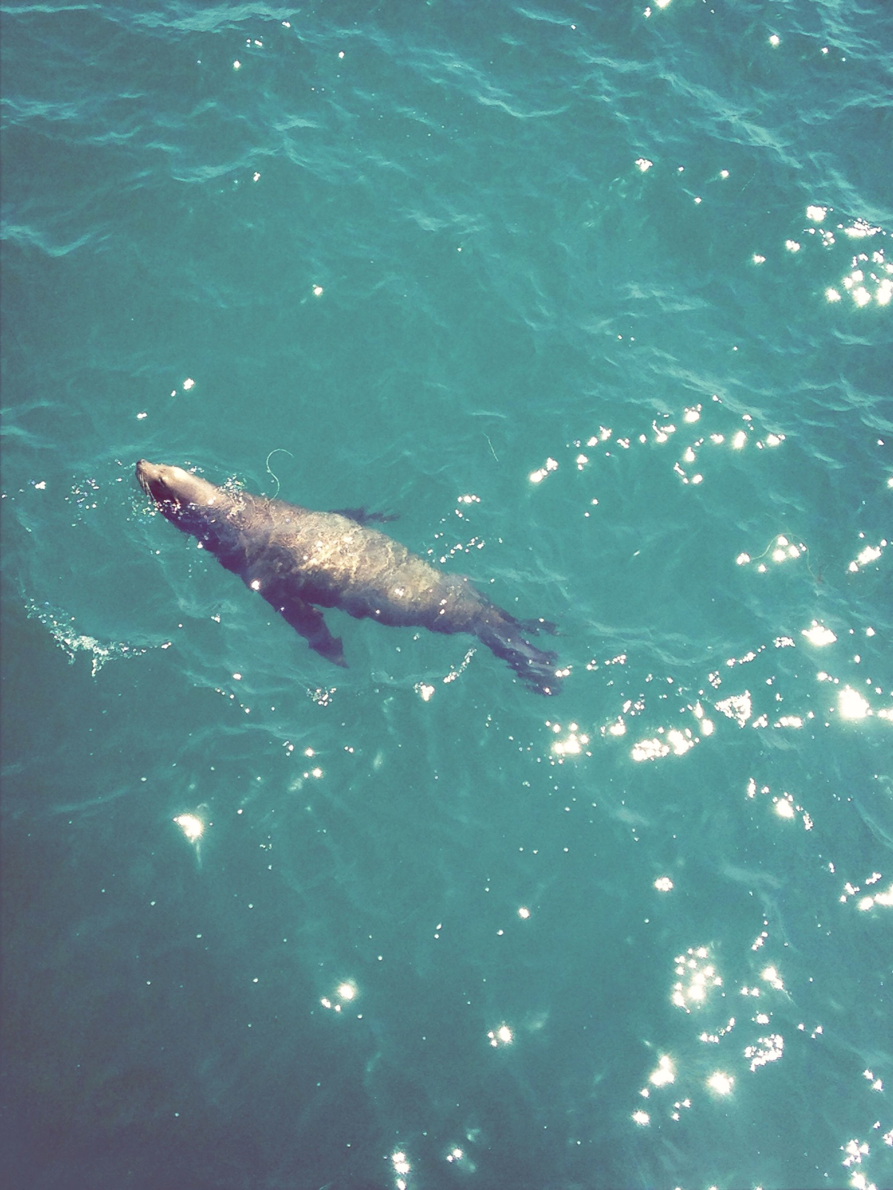 animal themes, water, animals in the wild, one animal, wildlife, sea, sea life, swimming, underwater, fish, undersea, nature, blue, high angle view, beauty in nature, waterfront, no people, outdoors, reptile, day