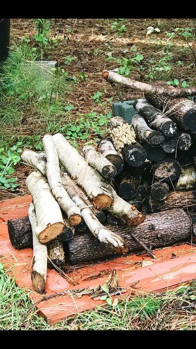 The Great Outdoors - 2017 EyeEm Awards Timber Outdoors Nature