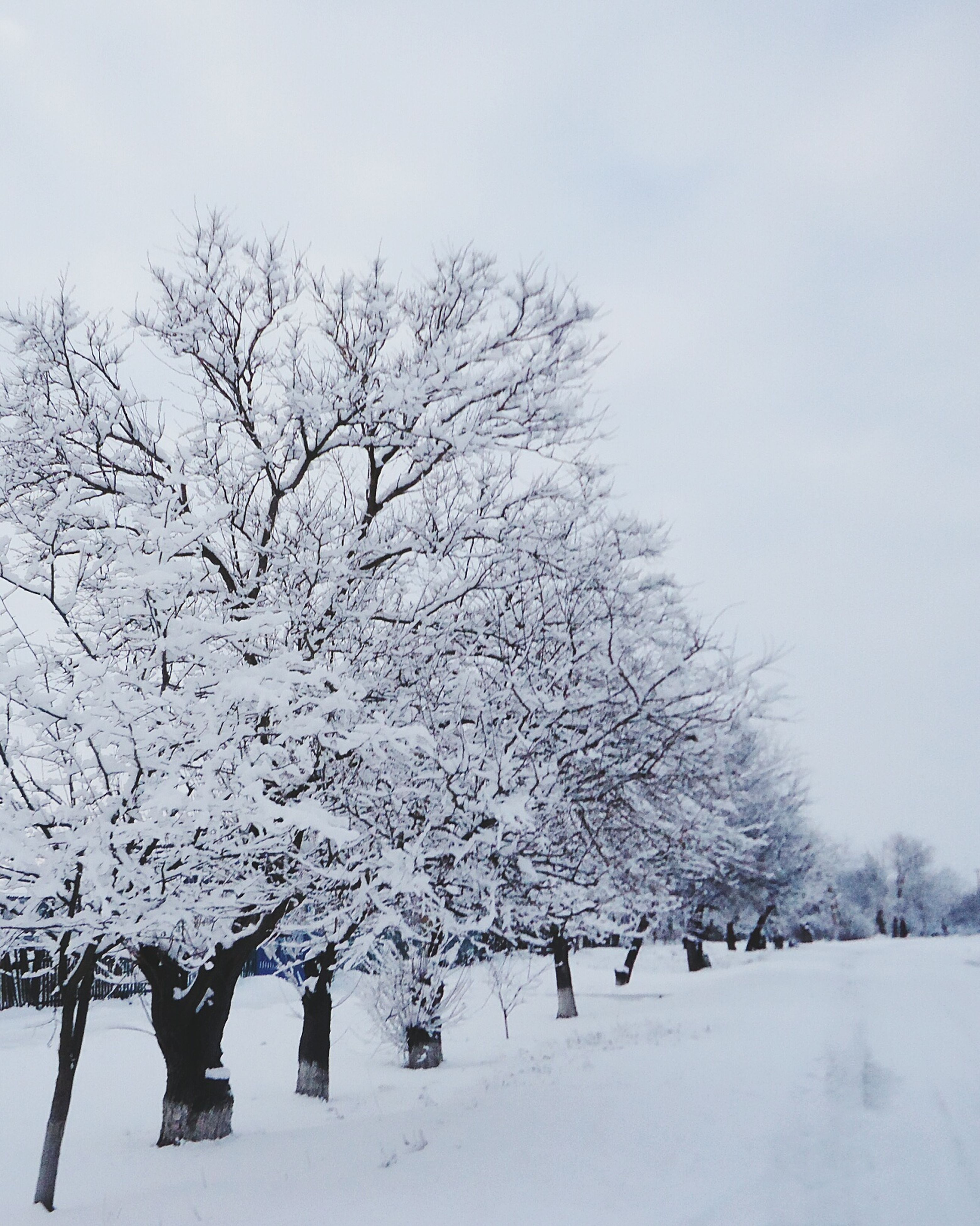 snow, winter, cold temperature, season, weather, bare tree, tree, covering, tranquility, nature, landscape, tranquil scene, frozen, white color, branch, beauty in nature, field, covered, scenics, snow covered