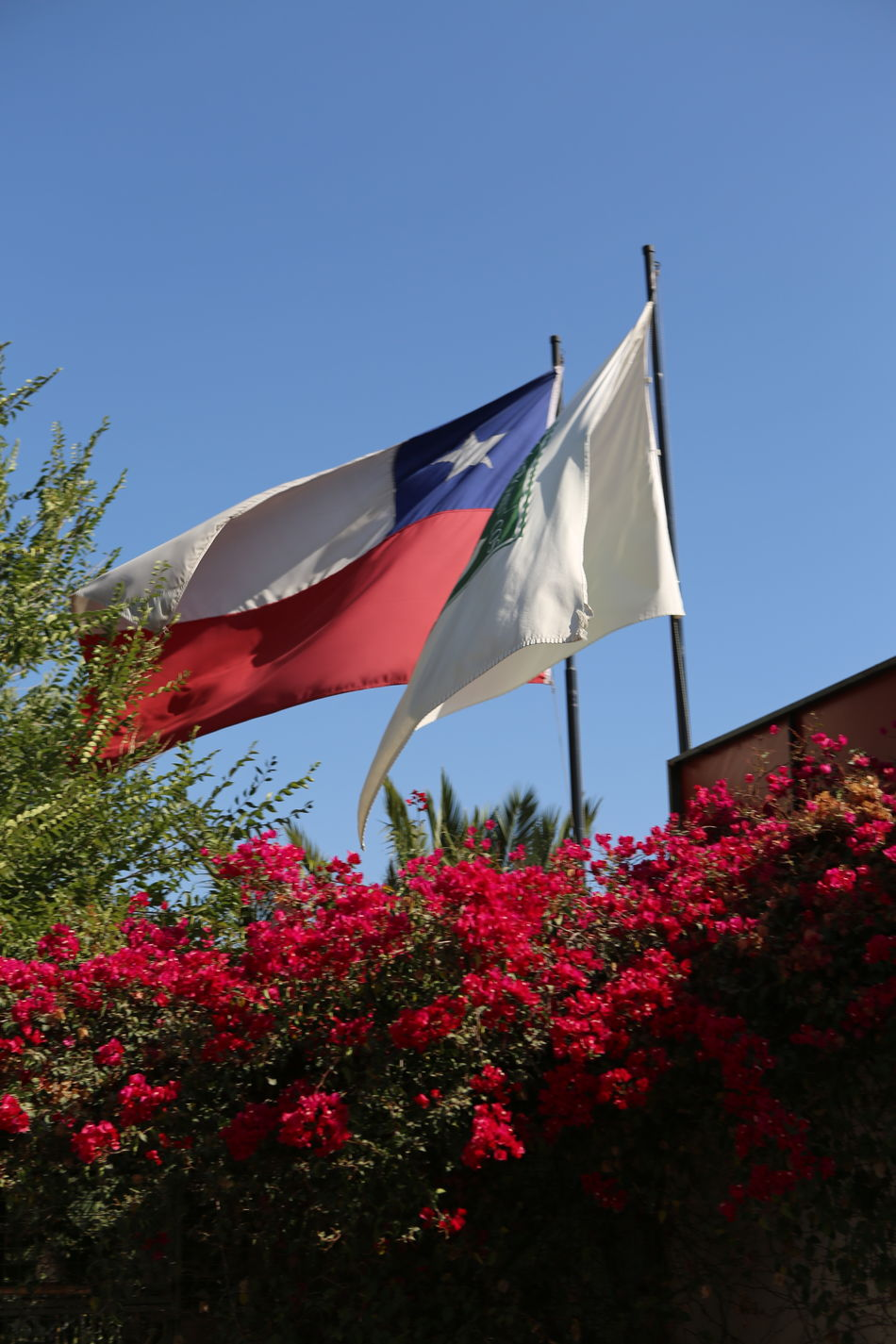 Bandeiras Blue Childhood Chile Clear Sky Day Flag Flower Nature No People Outdoors Patriotism Red Sky