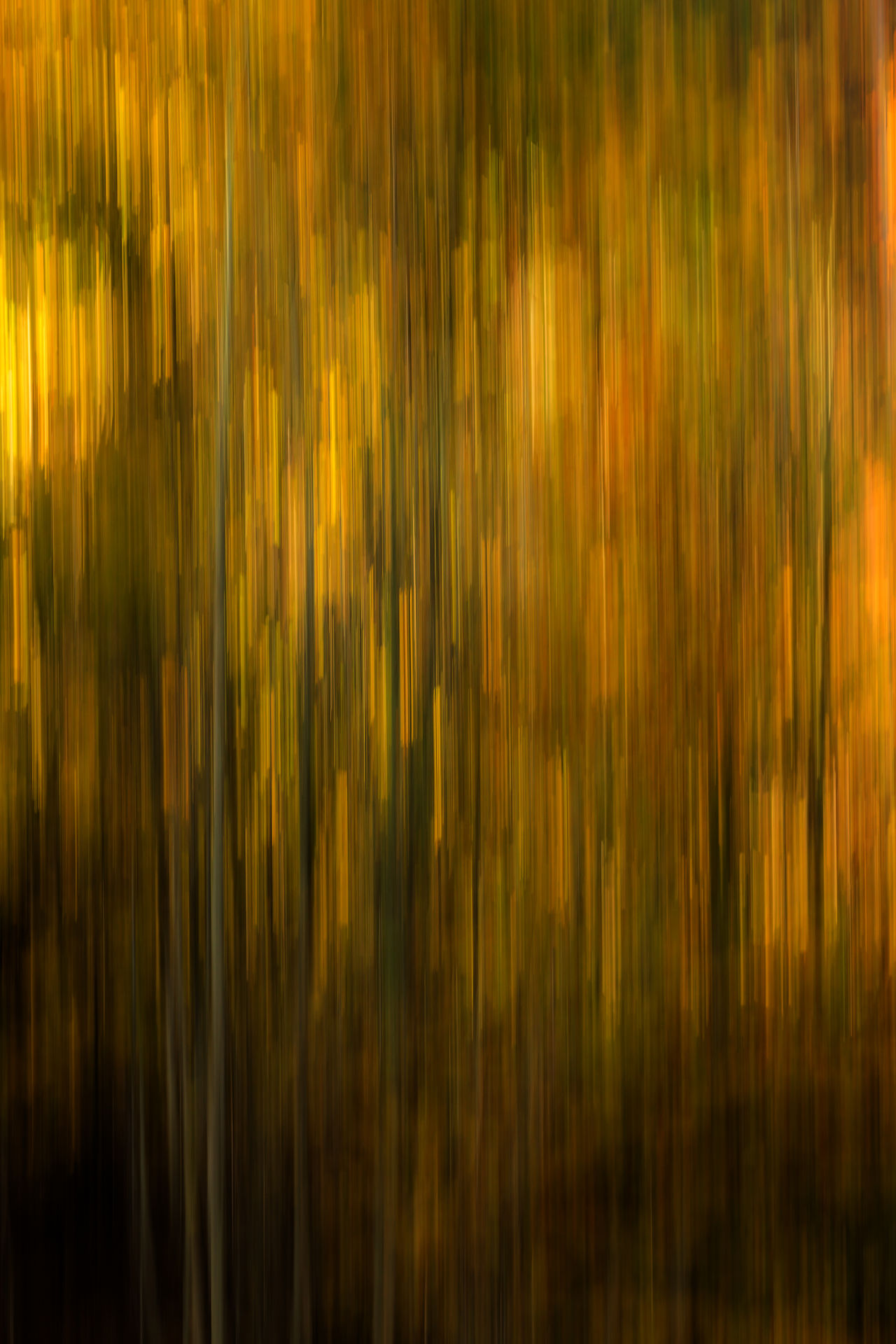 Abstract Abstract Backgrounds Backgrounds Brown Gold Gold Colored Motion No People Orange Color Pattern Shiny Smooth Textured  Textured Background Yellow Yellow Flower