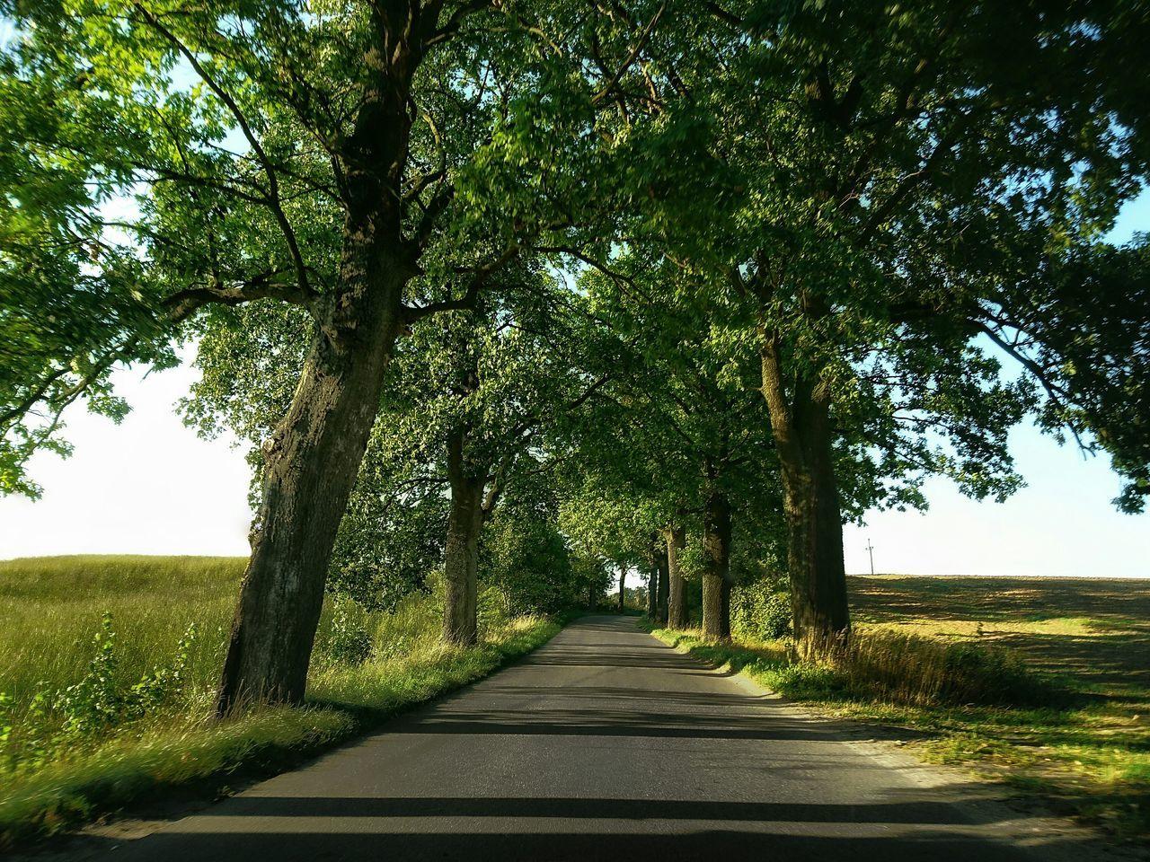 Road Tree Growth Green Color Day Nature Green Road Droga Long Poland Warmia Masuria Summer