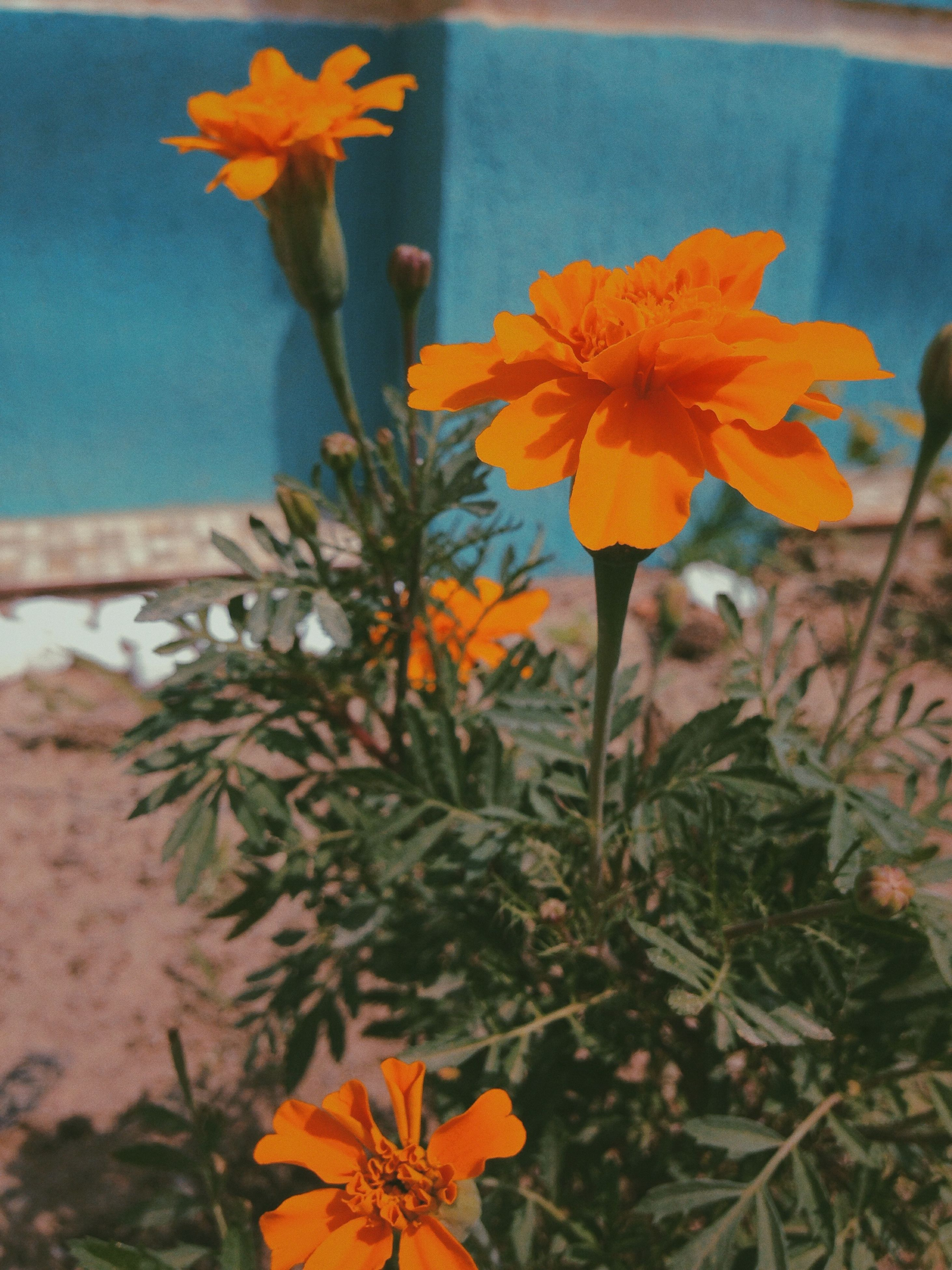 flower, fragility, petal, freshness, growth, flower head, plant, blooming, beauty in nature, close-up, nature, orange color, yellow, leaf, stem, focus on foreground, in bloom, day, outdoors, blossom