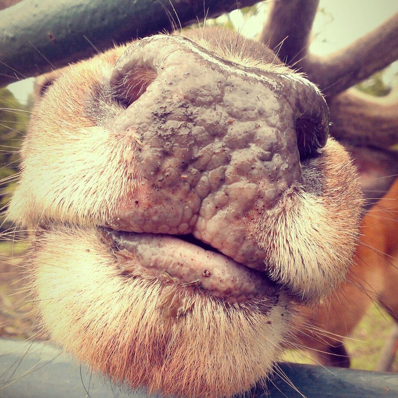 Kiss Funny FUNNY ANIMALS Deer