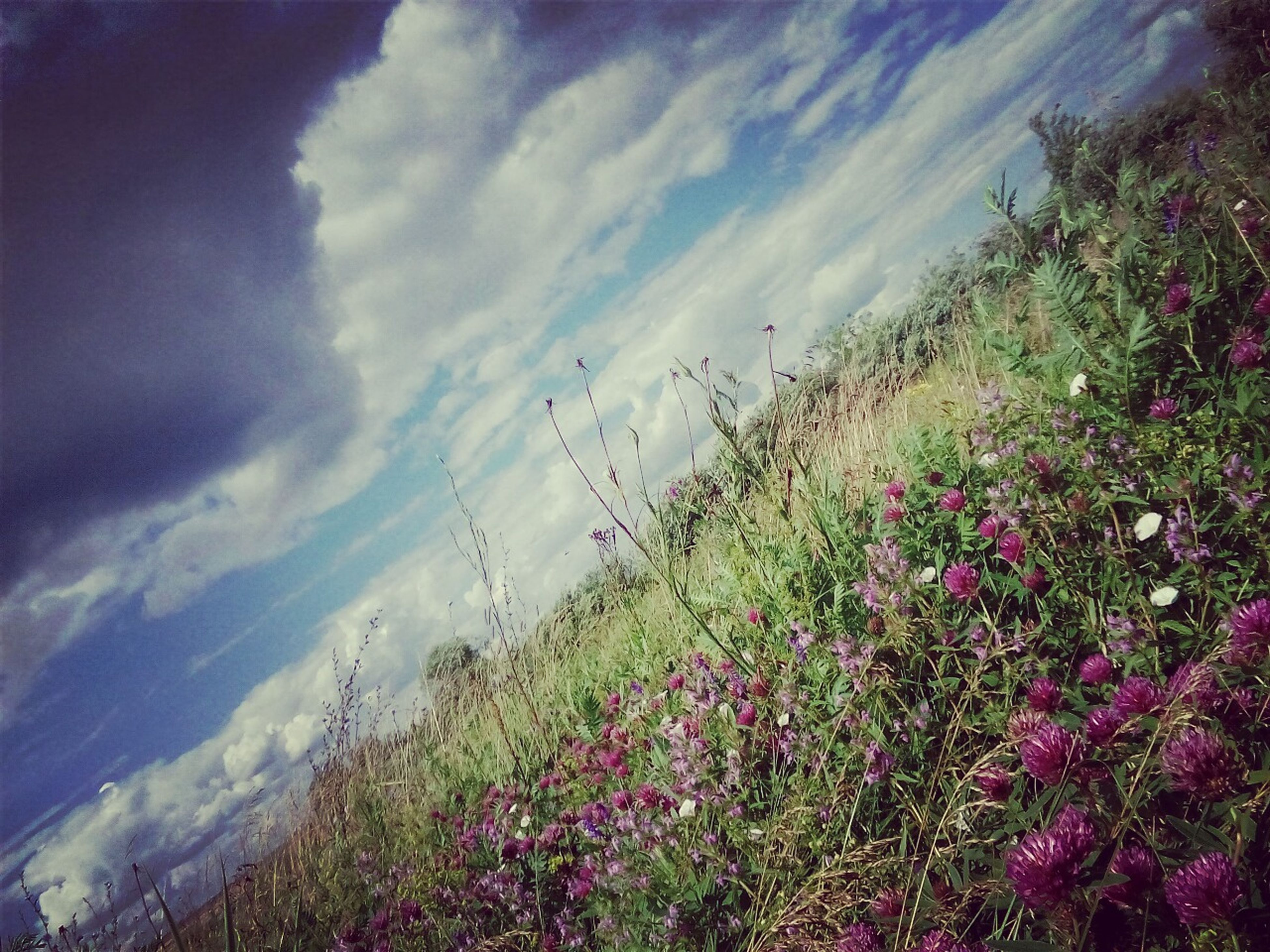 flower, sky, growth, beauty in nature, plant, cloud - sky, nature, tranquil scene, tranquility, freshness, scenics, field, fragility, blooming, cloudy, landscape, cloud, growing, outdoors, day, in bloom, no people, purple, non-urban scene, green color, idyllic, grass, petal, pink color, non urban scene, blossom, remote, botany
