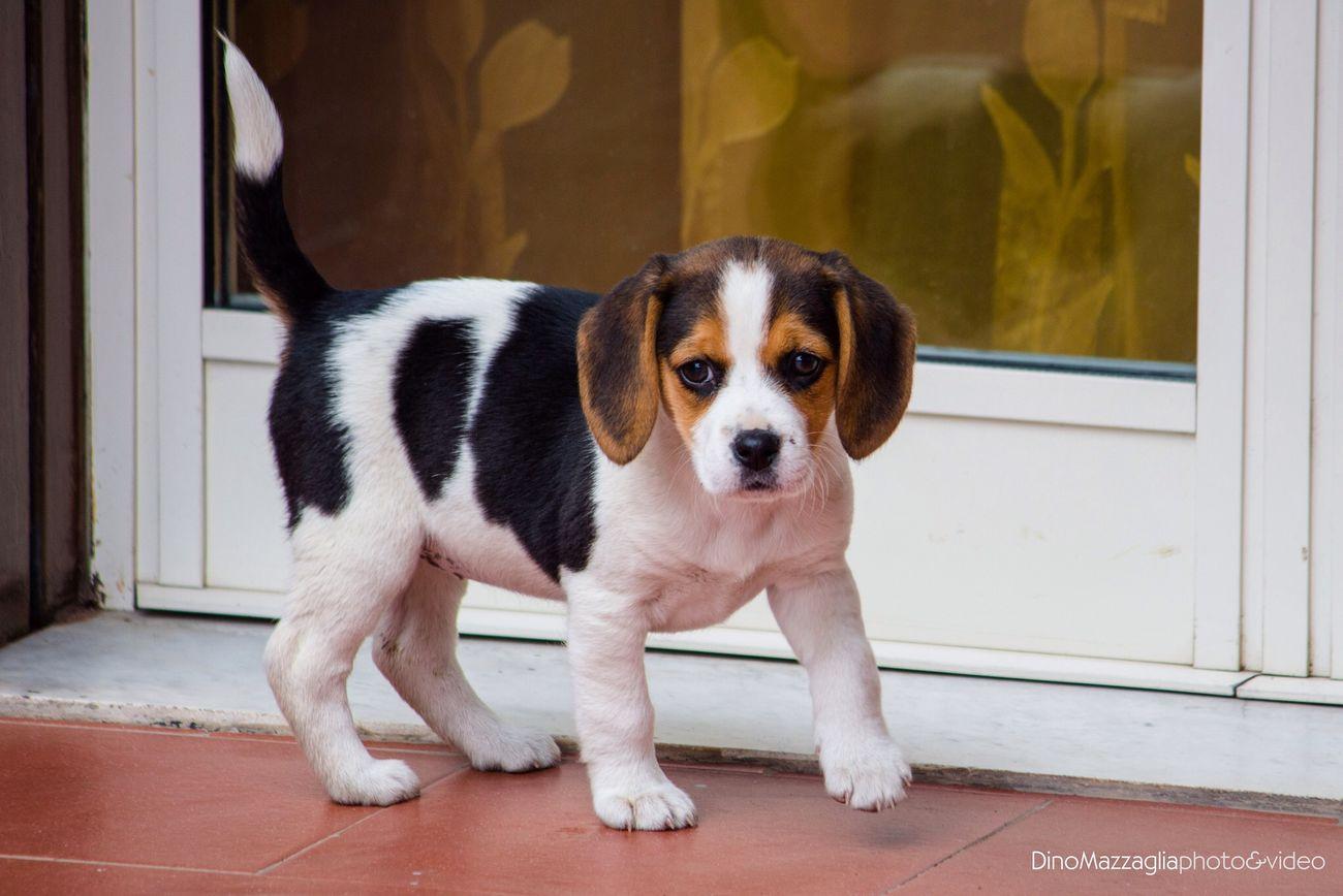 I Love My Dog Dog Puppy Animals Lovely Photography BBeautifuleEnjoying LifeTTaking Photos