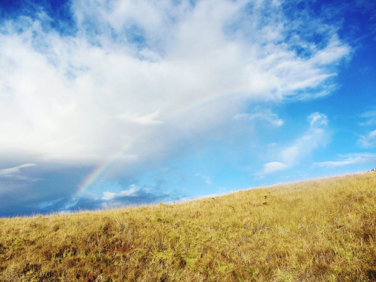 field, landscape, nature, sky, scenics, beauty in nature, tranquil scene, grass, tranquility, day, cloud - sky, growth, outdoors, no people