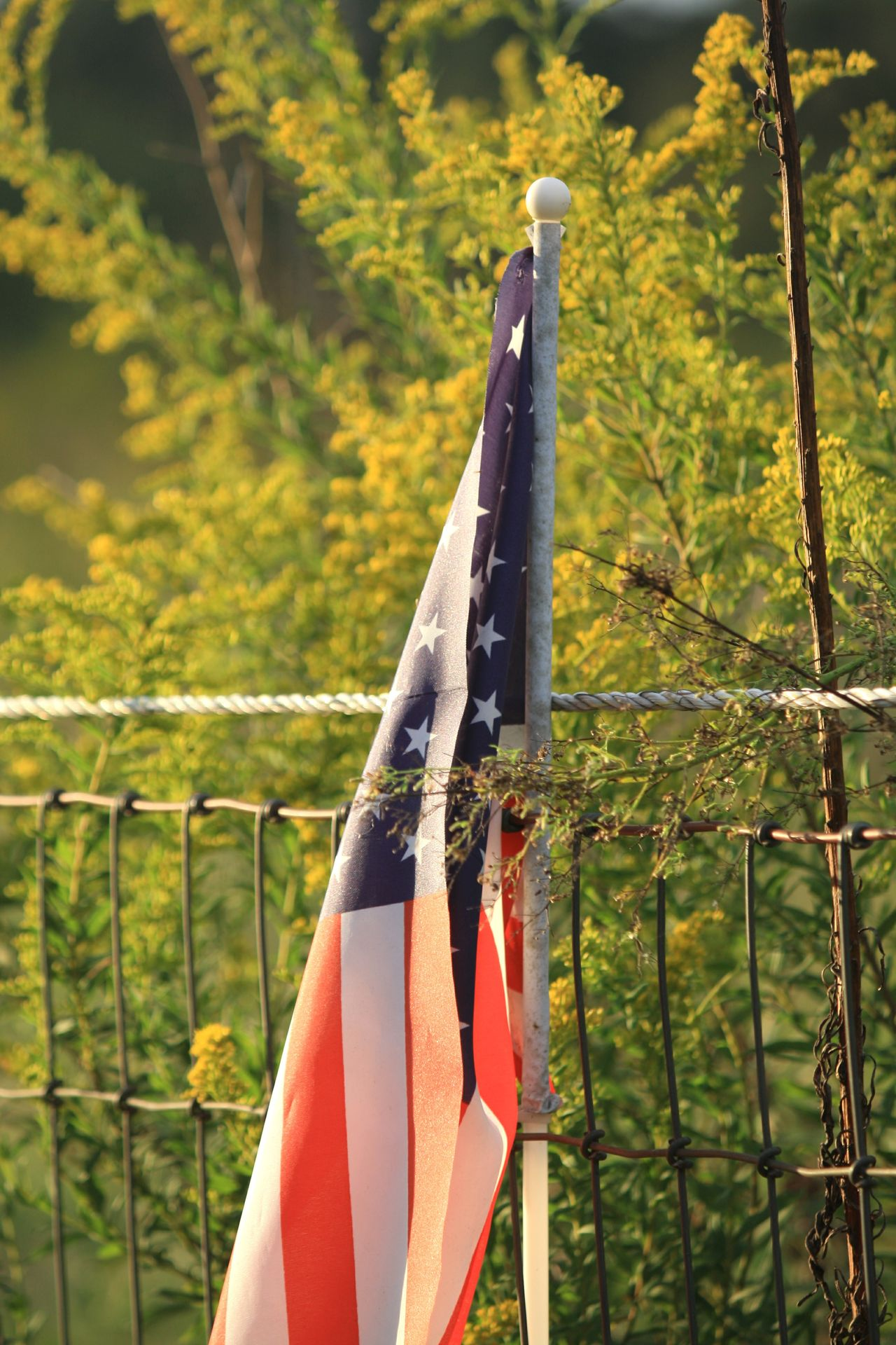 Outdoors Nature Close-up Holiday - Event Independence Togetherness Patriotism Flag Love Plant Yellow Yellow Flower