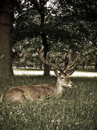 Tree No People Outdoors Day Close-up Nature Deer Wollaton Hall Wollatonpark Green Grass Animal Nottingham Deer Park
