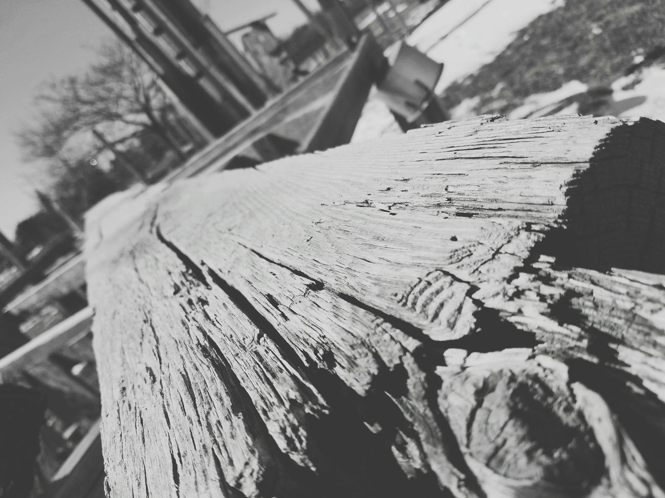 Wood - Material Timber Plank Log Black And White Photography Outdoors Nature Day Nature_collection Landscape_collection EyeEmNatureLover Real Photography Artgallery Getting Creative City Real Life Live, Love, Laugh Learn & Shoot: Balancing Elements Leisure Activity Woodland Walk Artphotography EyeEm Best Shots - Nature EyeEm Best Shots - Black + White Enjoying The Sights Lovelovelove Wood Carving Close-up