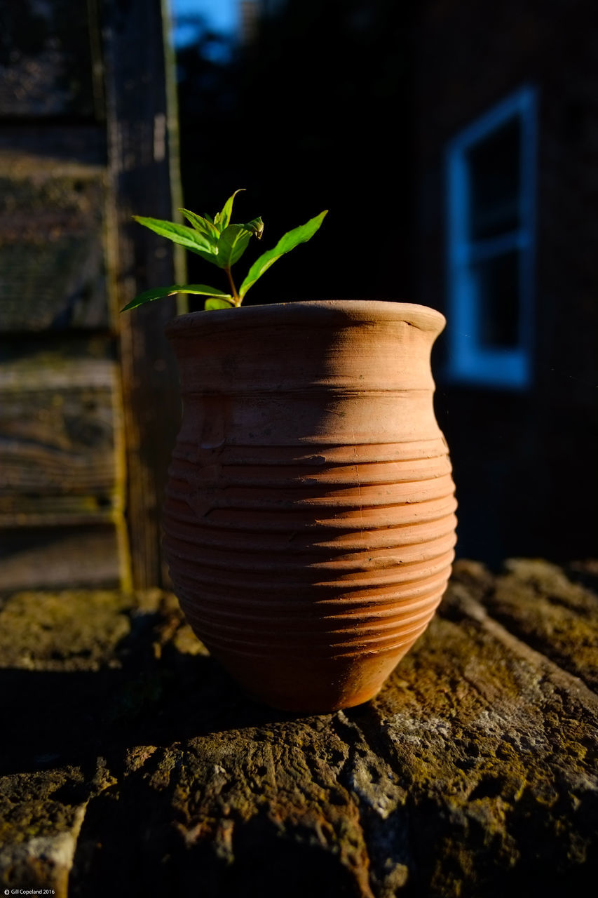plant, growth, no people, leaf, close-up, outdoors, nature, day