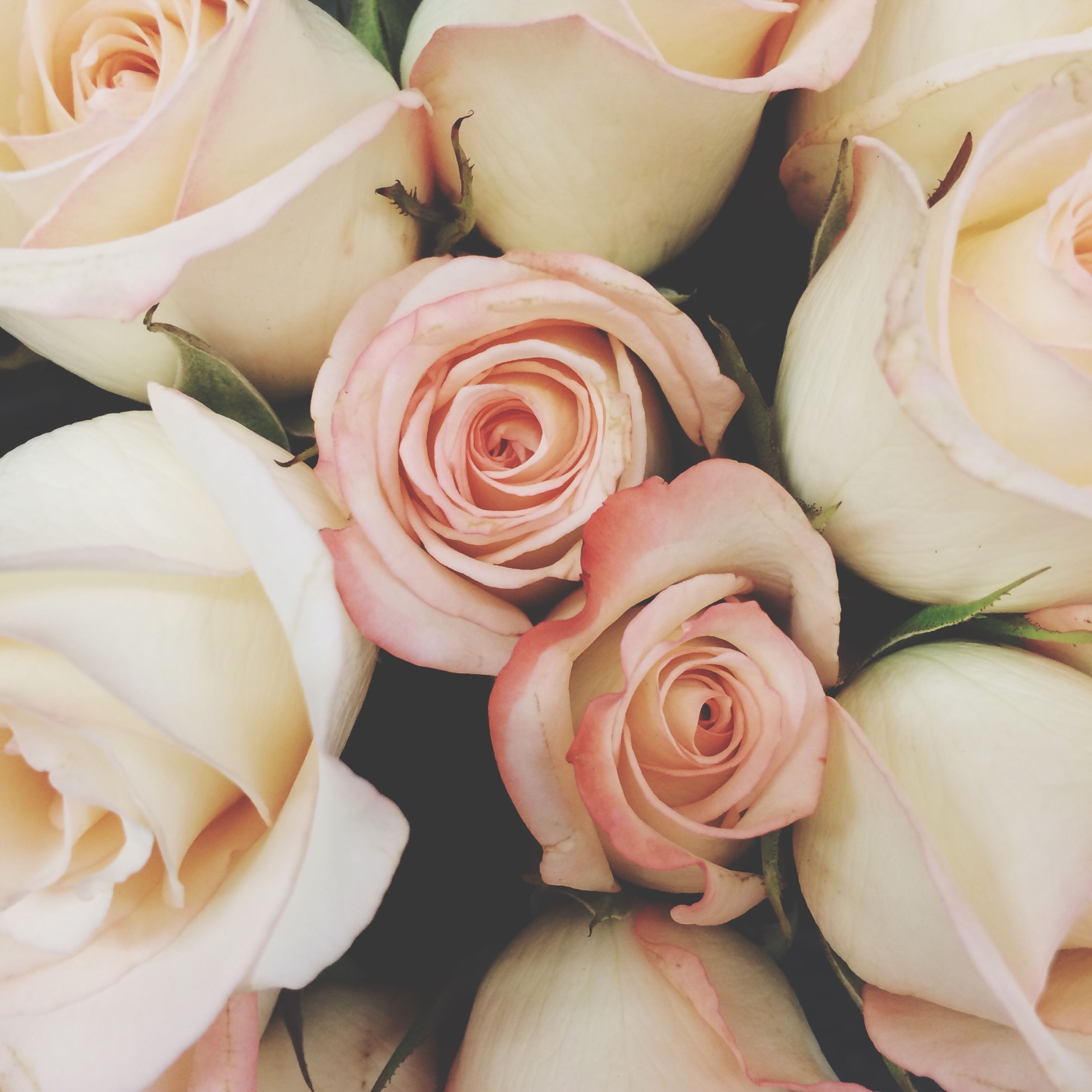 flower, freshness, petal, rose - flower, fragility, flower head, full frame, beauty in nature, backgrounds, rose, pink color, close-up, nature, growth, indoors, high angle view, bouquet, natural pattern, softness, blooming