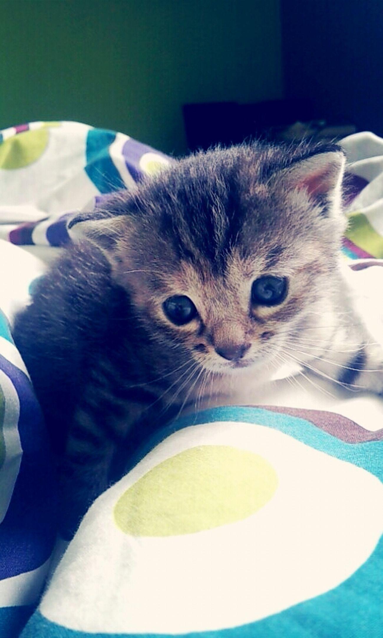 Kattycat Cat Cute Tala