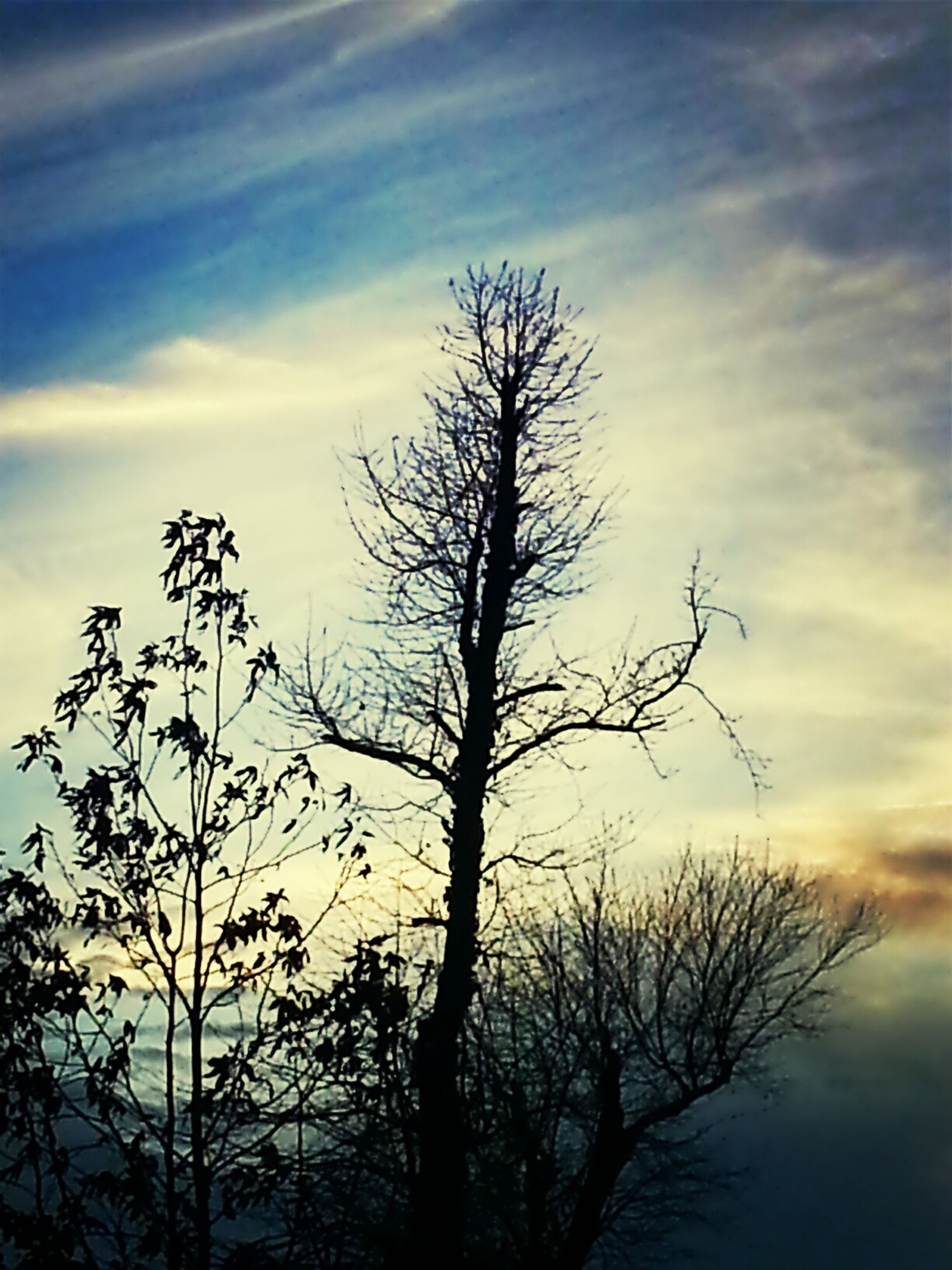 bare tree, sky, silhouette, branch, tranquility, sunset, tree, tranquil scene, cloud - sky, beauty in nature, nature, scenics, low angle view, dead plant, cloud, tree trunk, growth, cloudy, dusk, idyllic