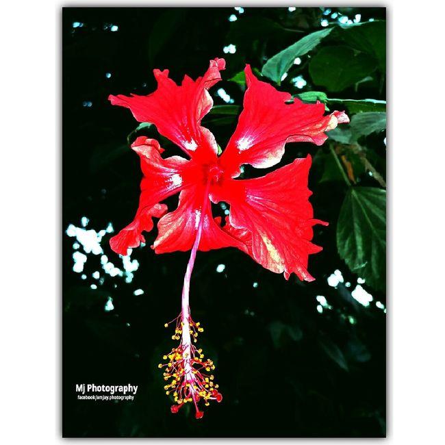 Flower Flowers, Nature And Beauty Flower & Butterfly Flowe