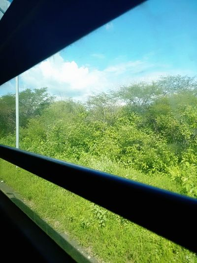 Inthebus Windows Landscape Landscape Ontheroad Plants 🌱 Perspective Simplicity Nature Photography EyeEm Gallery Eye4photography  Scenary Personal Collection Road