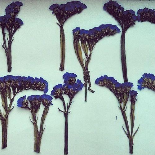 Волшебная синева VSCO Vscocam Vsconature Vscoflowers vscogood vscolover vscomood vscophoto vscolife vscoeurope vscorussia vscomoscow