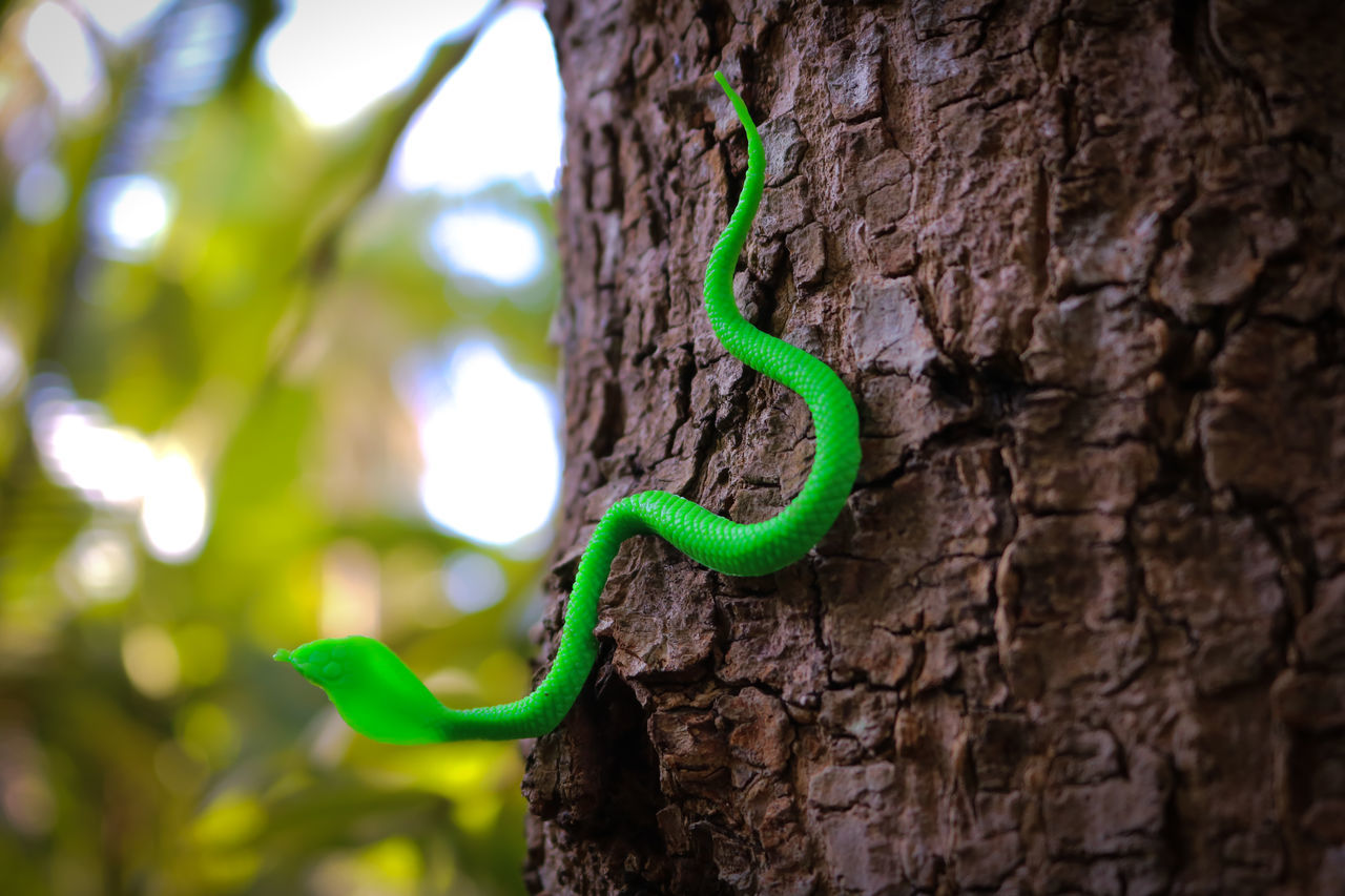 rubber snake, fake snakes Bark Beauty In Nature Close-up Day Fake Snakes Focus On Foreground Green Green Color Growing Growth Natural Pattern Nature No People Outdoors Rubber Snake Selective Focus Sneck Textured  Tranquility Tree Tree Trunk