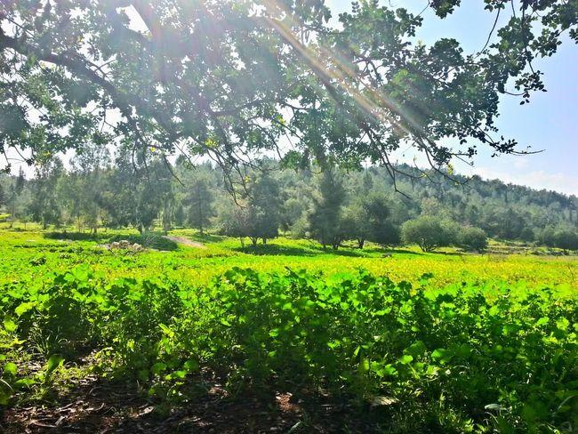 Taking Photos HDR Sunlight Nature Tree Green