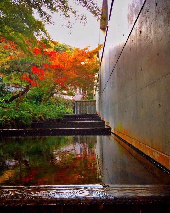 Autumn Colors Autumn Leaves Fall Beauty Fall Colors Colorful Autumn Garden Museum Kyoto Japan