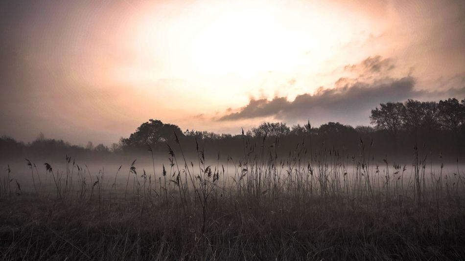 Morning Glow Foggy Morning Foggy Landscape Meadowlands Beautiful Nature Naturelover Morning Light Springtime Enjoying The View Nature Art Fine Art EyeEm Best Shots EyeEm Best Edits Nature Photography Catch The Moment Morning Walk Outdoors