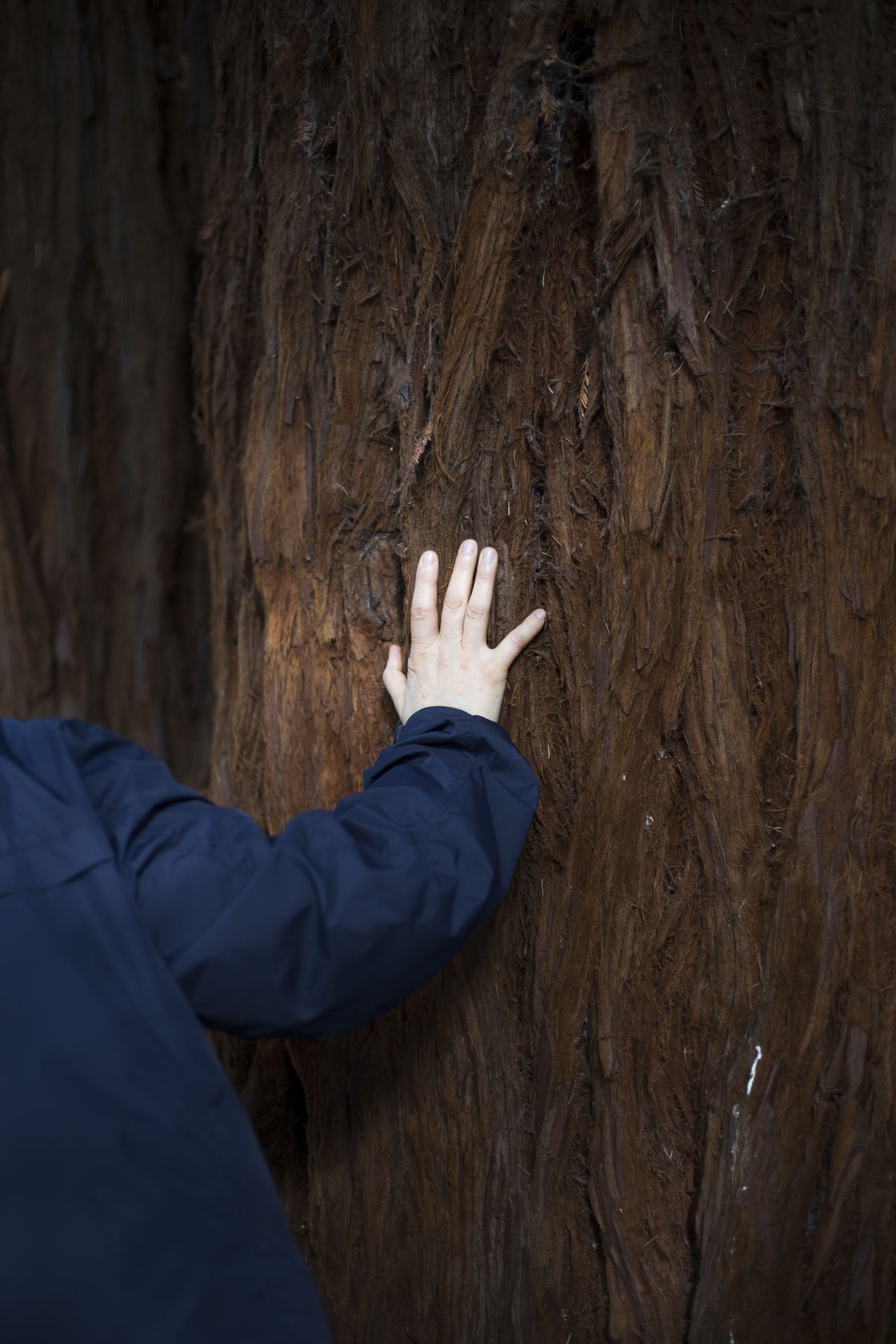 Adult Adults Only Adventure Big Tree Day Feel Feel The Nature Human Body Part Human Hand Nature Nature_collection One Man Only One Person Only Men Outdoors People Real People Sequoia Touch The Sky Tree