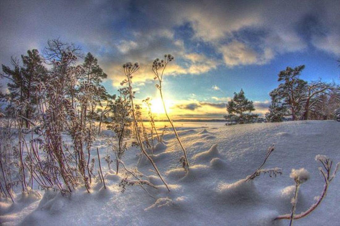 Suomentalvi Suomi Finland Maisema Outdoor Beautifull Winter Talvi Snow Lumi Sun Auringonlasku Nvkviikonkuva Canonphotography Canon Landscape Seurasaari Visitfinland @ourfinland Samyang Fisheye