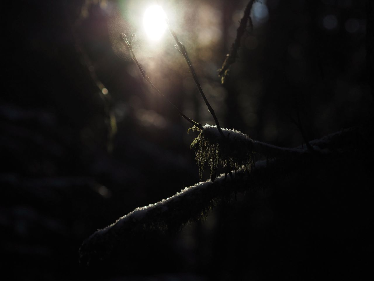 Twig Nature Forest Moss Snow Olympus OM-D E-M5 Mk.II M.Zuiko 45mm 1:1,8