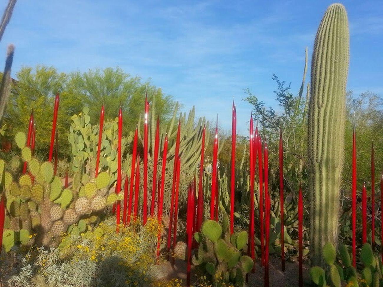 Oldpicture Cactus Desertbotanicalgarden