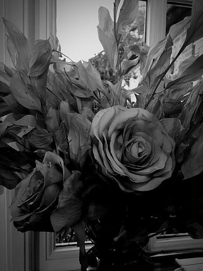 Flower Close-up No People Plant Beauty In Nature Growth Vertical Freshness Day Indoors  Flower Head Nature Monochrome Photography
