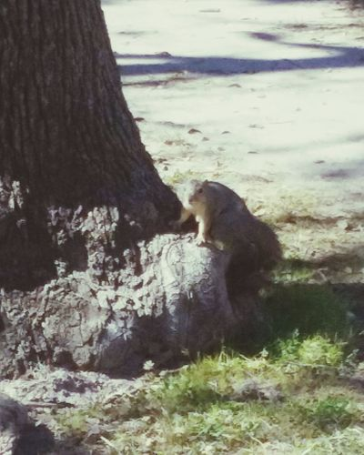 Tree Trunk Squirrel Photo Mason Park Texas Hide And Seek Looking At Camera People Watching Escaping Outdoor Photography Android Photography Animals Posing Capture The Moment Taking Photos