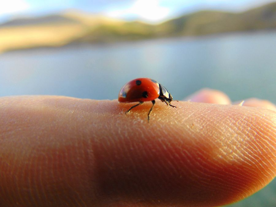 Ladybug used my finger as a airport 🛫 My Best Photo 2015 My Favorite Photo Ladybug Bugs Fingers Airport At The Airport EyeEm Best Shots - Nature Nature_collection Popular The Great Outdoors With Adobe Enjoying The View Beautiful Day Beautiful ♥ Sweet RePicture Growth Ladyphotographerofthemonth The Great Outdoors - 2016 EyeEm Awards The Essence Of Summer 43 Golden Moments On The Way Maximum Closeness The Drive What Who Where Break The Mold Art Is Everywhere TCPM EyeEmNewHere The Street Photographer - 2017 EyeEm Awards The Great Outdoors - 2017 EyeEm Awards The Photojournalist - 2017 EyeEm Awards The Portraitist - 2017 EyeEm Awards Sommergefühle Wine Not EyeEm Selects EyeEm LOST IN London Neon Life