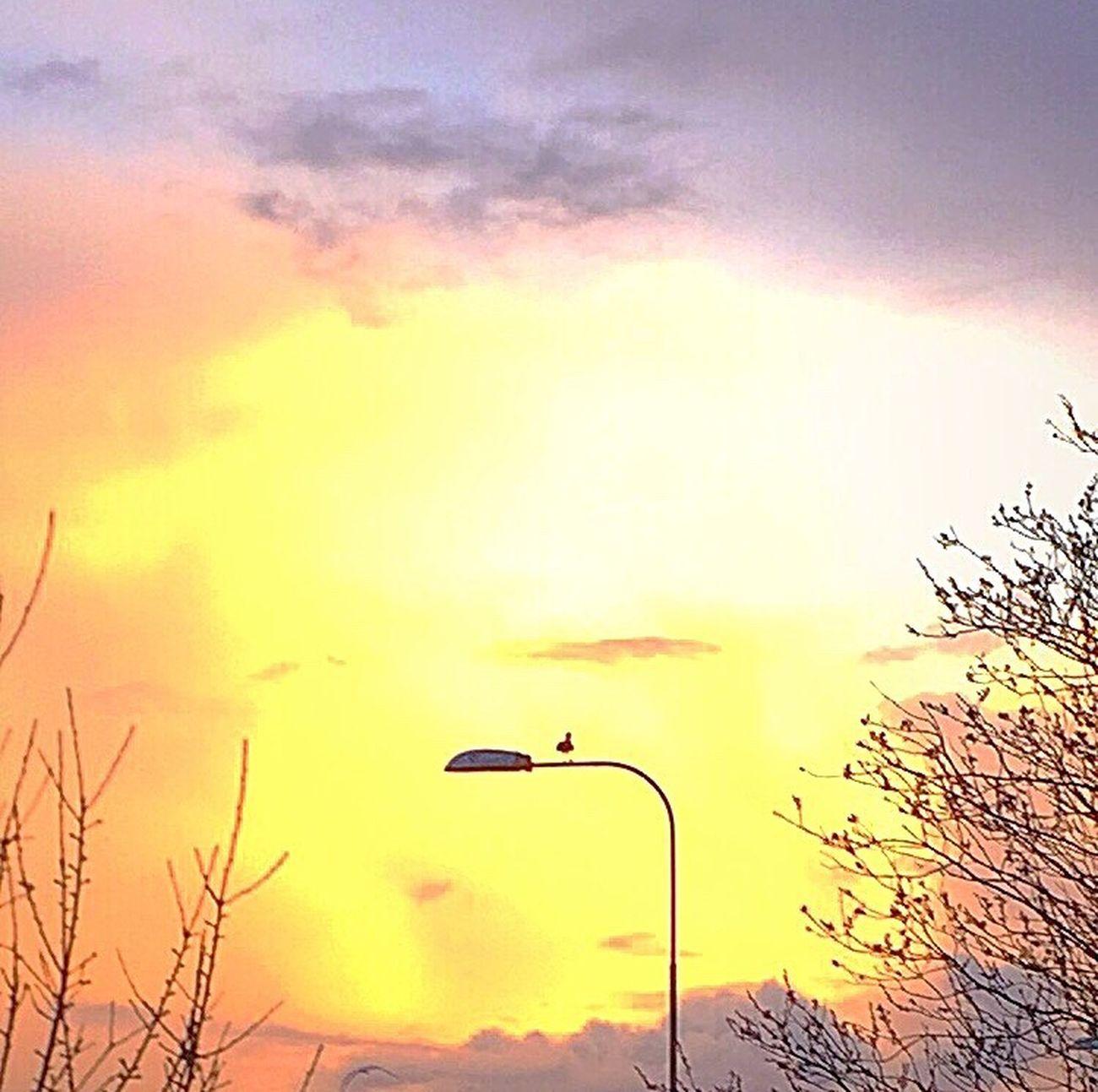 Sunset Sky Beauty In Nature Nature Cloud - Sky Outdoors Beautiful Light EyeEm Nature Lover Sunlight Tree Bird