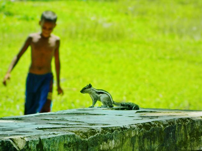 Squirrel On Park Bench Squirrel & Little Boy Squirrel Closeup Minimalism Photography Conceptual Photography  Negetive Space Park Bench Blurred Background Pastel Power Soft Pastel  Beauty In Nature Me, My Camera And I Showcase March Nature On Your Doorstep Still Life Light Reflecting On Surface Visual Stories Portrait With Atmosphere Q Fine Art Green Background Playfull Photography Children At Play Snapshot Of Life Creative Light
