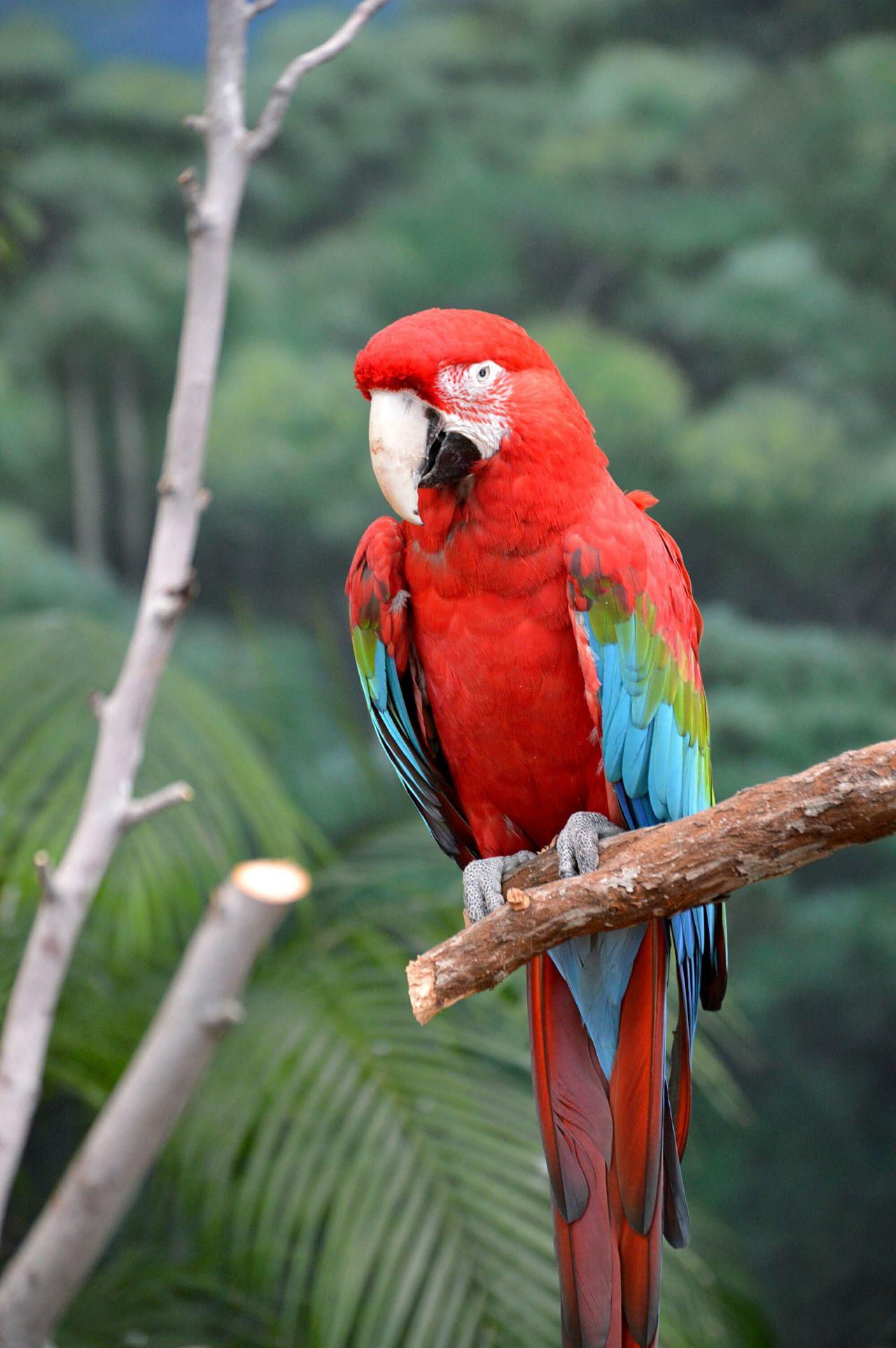 Parrot Redbird Zoo