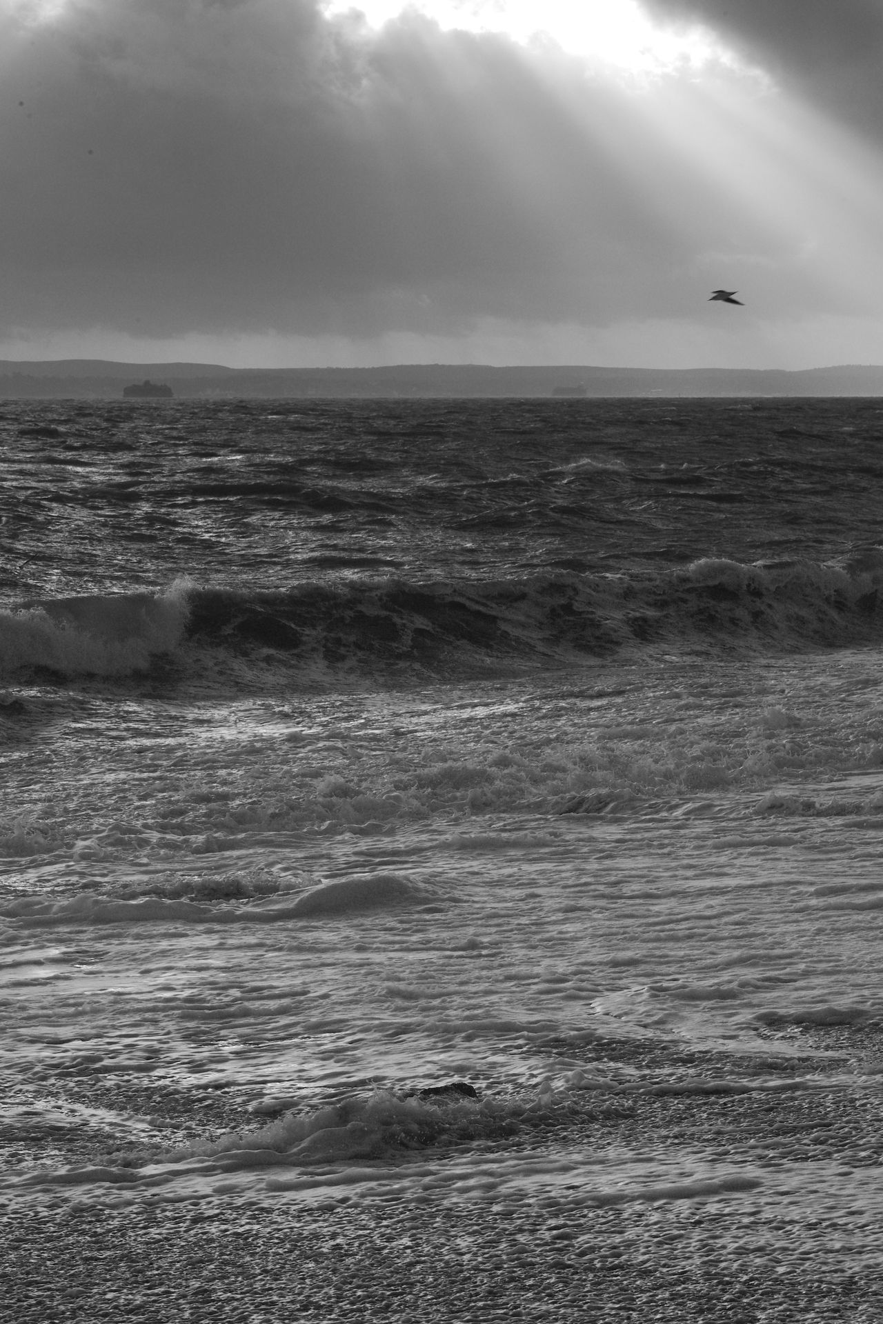 Seagull In The Light Black & White Blackandwhite Sea Sea And Sky Seagull Southsea