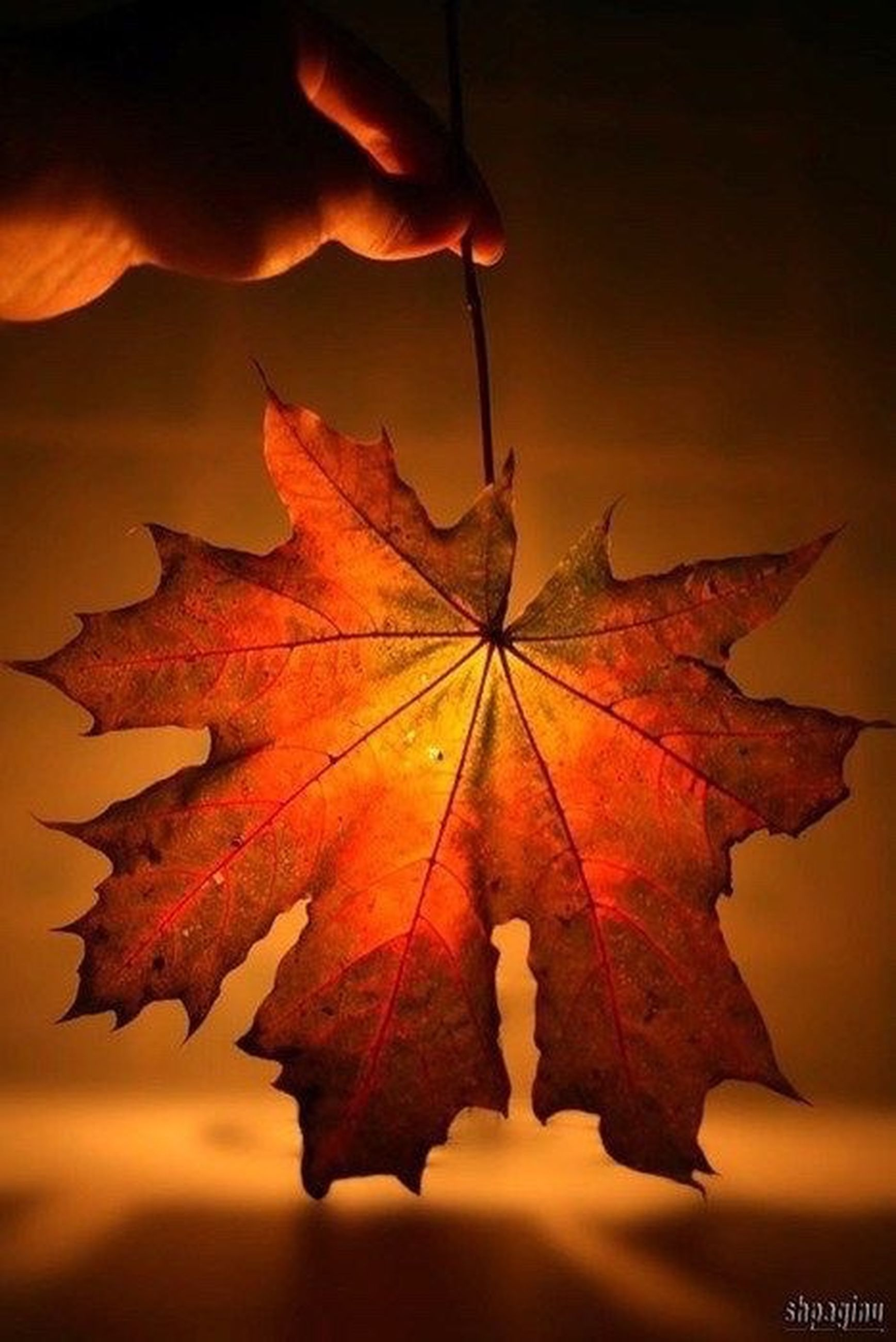 leaf, autumn, change, season, close-up, orange color, leaf vein, dry, maple leaf, natural pattern, natural condition, leaves, nature, tranquility, beauty in nature, person, multi colored, fragility, outdoors, scenics