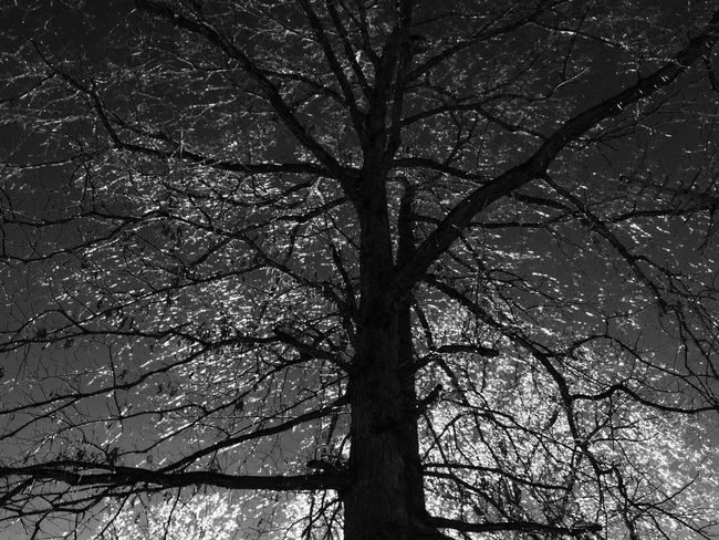 Branch Tree Low Angle View Bare Tree Tree Trunk Tranquility Nature Beauty In Nature Outdoors Sky Single Tree Ice Non-urban Scene Dramatic Angles Monochrome Photography Blackandwhite Black And White Tranquil Scene Day Majestic Full Frame