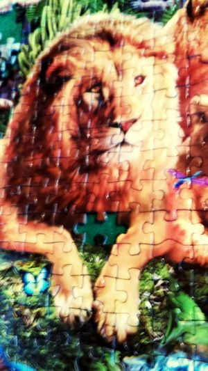 Close-up Outdoors Day Sun ☀ France Sud Where Is The End? Psyco Lions Head Délires Puzzletime