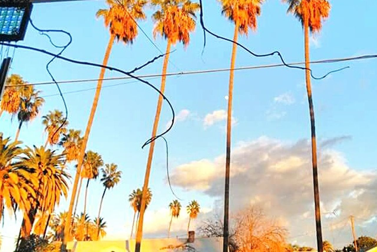 Sky No People Tree Nature Low Angle View Outdoors Day Close-up Beauty In Nature Architecture California Californiathroughmylens Scenics Scenery Streetphotography