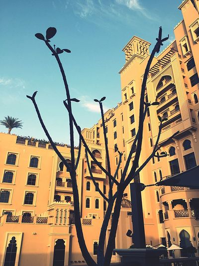 Arabic Inspired Architecture Low Angle View Branches Silhouette Afternoon Light