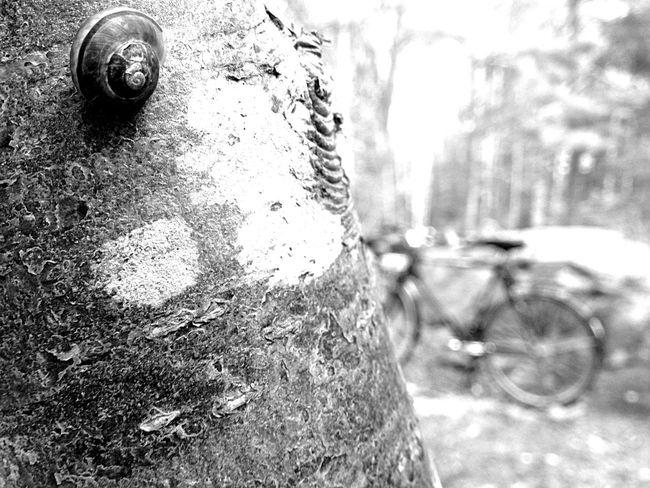 EyeEm Team Bw_collection Minimalist Minimalism_bw EyeEm EyeEm Bnw EyeEm Black&white! Minimalismo Minimal B&w Nature