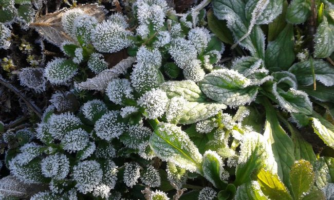 Frosty macrocosm... Icy Icy Flowers Morning Morning Dew Cold Iceflower Grass Green Mobilephotography Mobile Photography The Purist (no Edit, No Filter) No Edit/no Filter Nature Nature_collection Naturelovers Macro Macro Photography Macro_collection