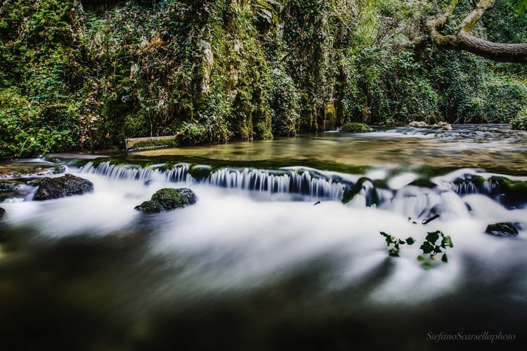 Nature Tree Water Beauty In Nature Motion Scenics Outdoors Long Exposure Waterfall Growth Day Tranquility