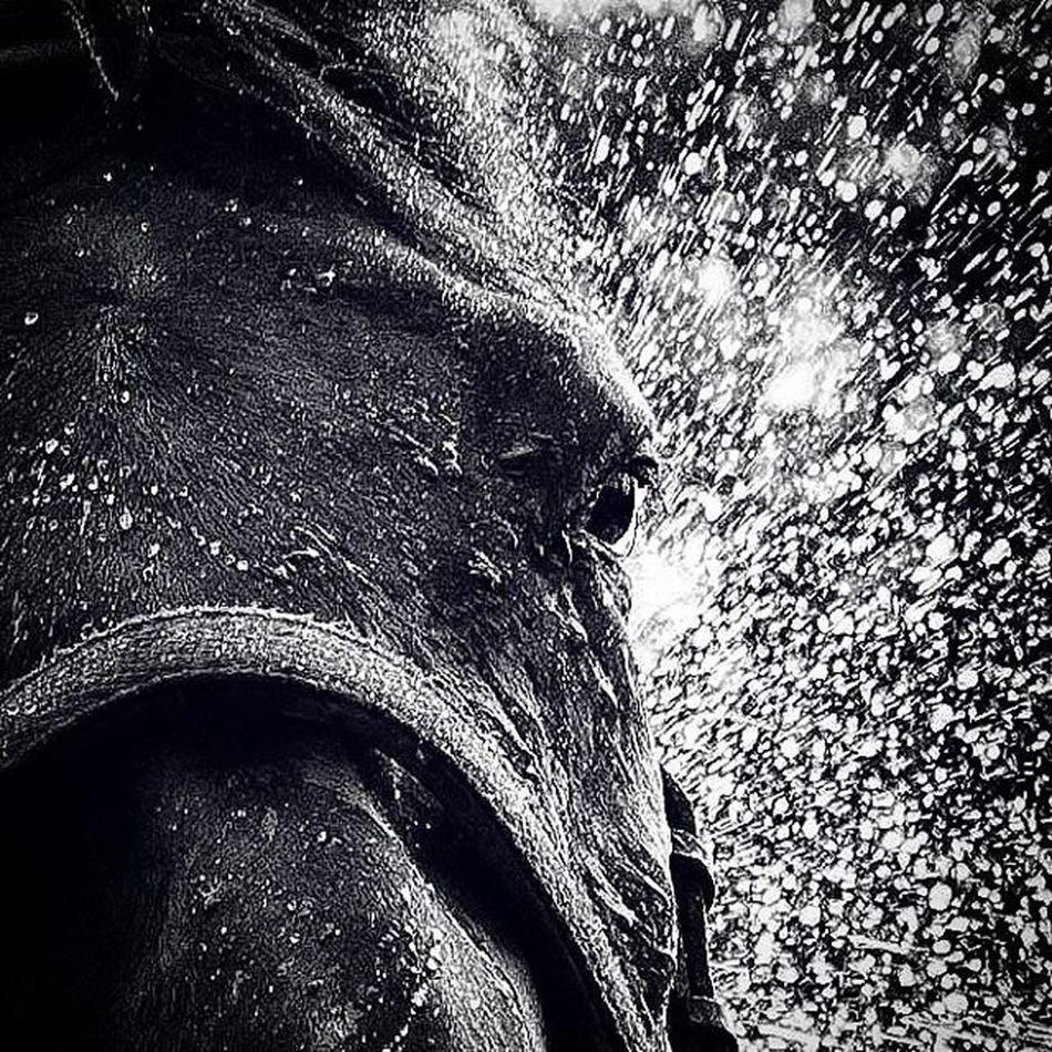 🚿🚿🚿 Bath Bathtime Horse Horses Water Blackandwhite Black Filly Stable Nature Equine Equinephotography Equestrian Landscape Instasyon Aniyakala Istanbuldayasam