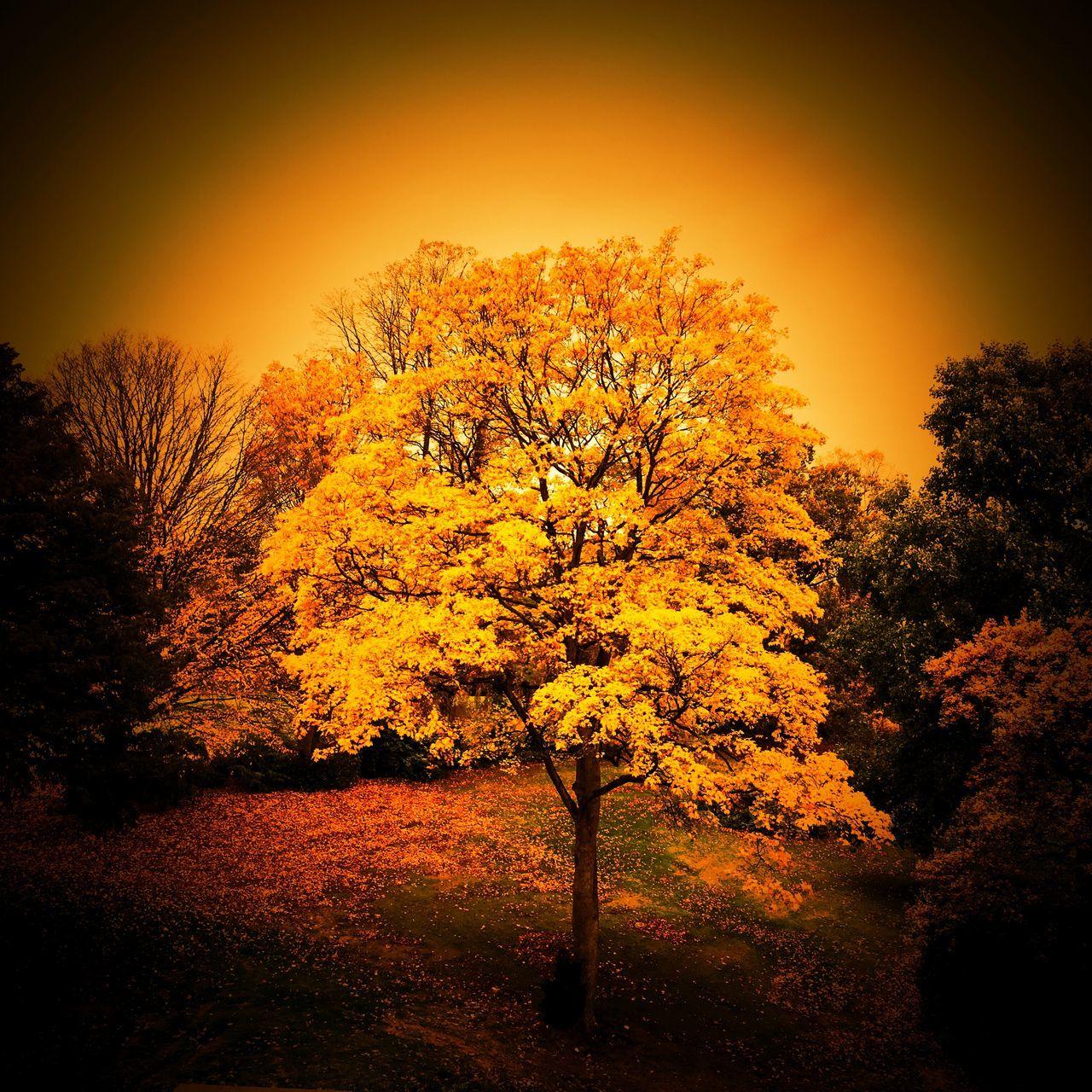 Autumn scene taken from Queens Park in Crewe Cheshire.