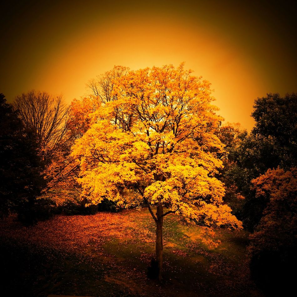 Autumn scene taken from Queens Park in Crewe Cheshire.
