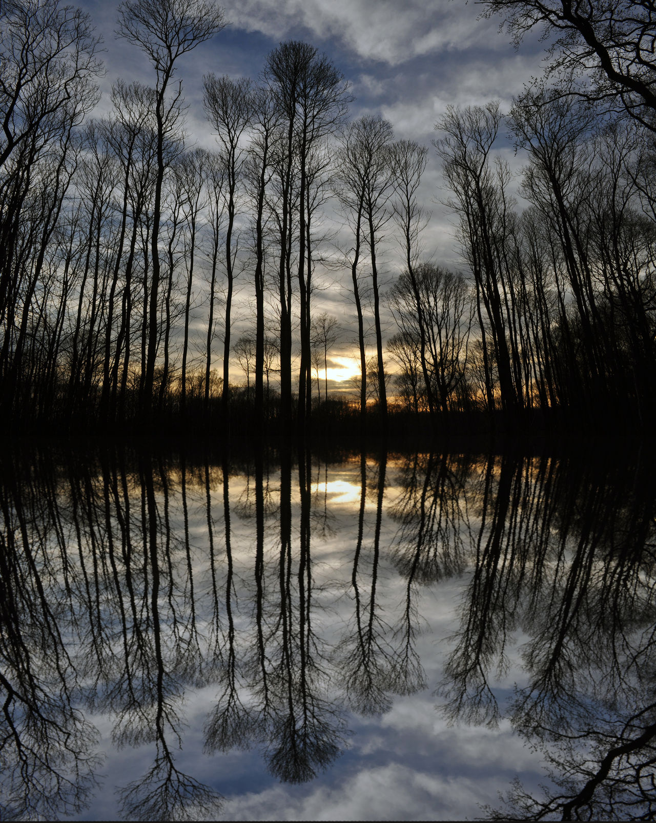 sunset reflection Forest Forest Photography Forest Trees Reflection Reflection In The Water Reflection Lake Reflection Photography Reflections In The Water