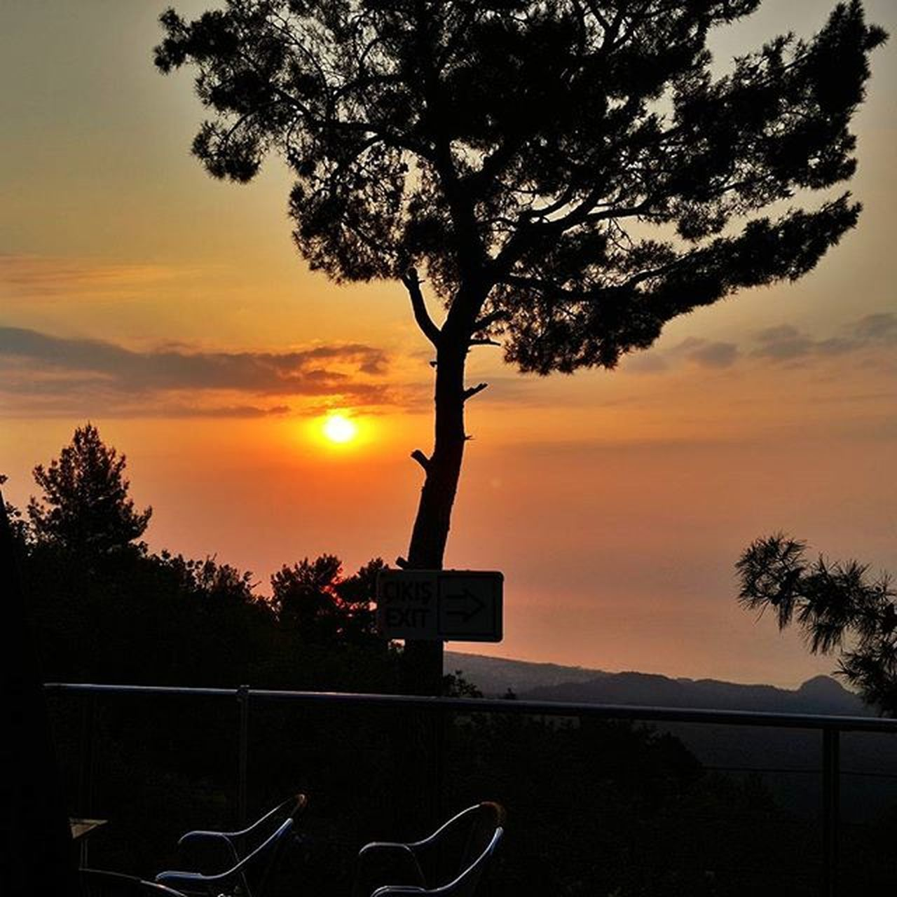 tree, sunset, beauty in nature, silhouette, sky, no people, scenics, tranquility, outdoors, nature, swimming pool, branch, city, day